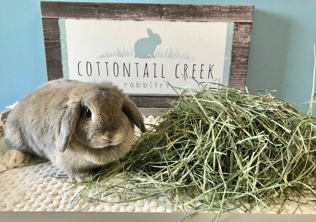 what veggies can i feed my rabbit