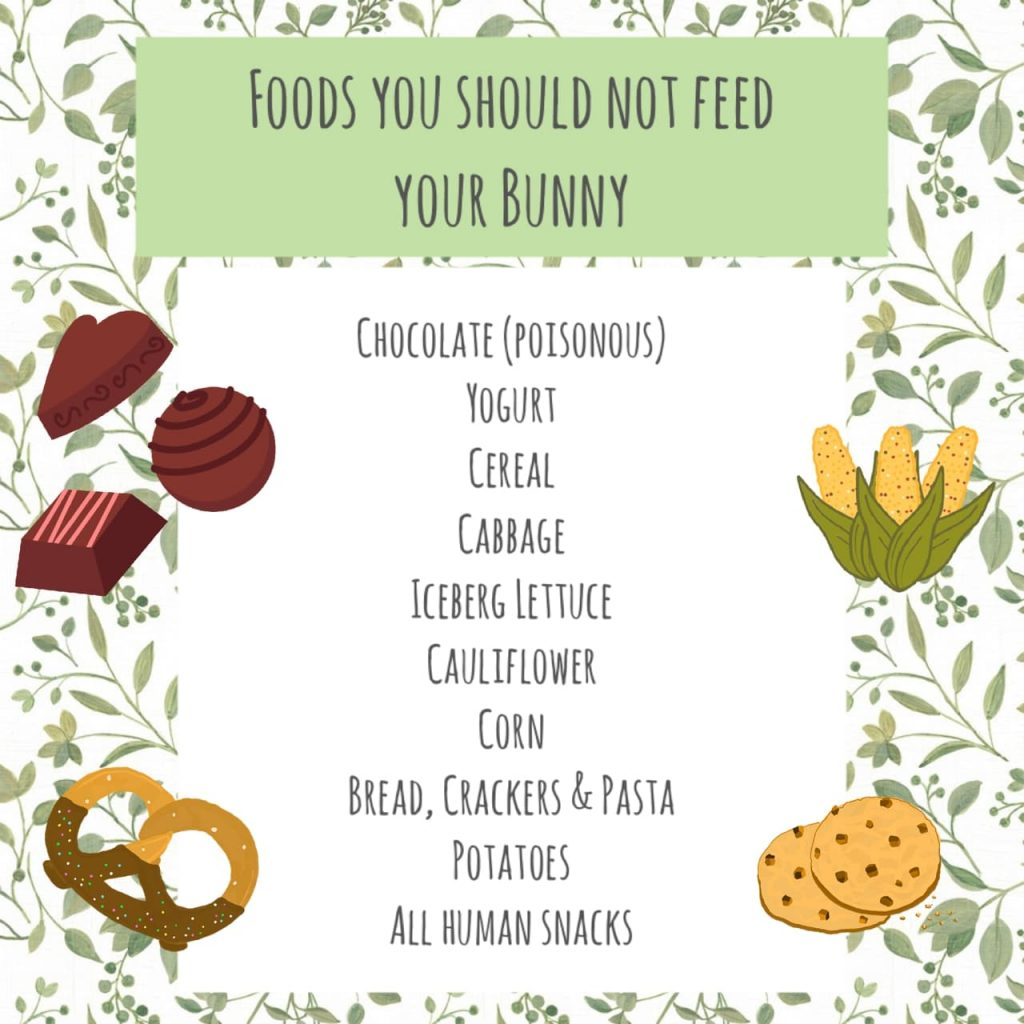 These are foods you should not give your bunnies