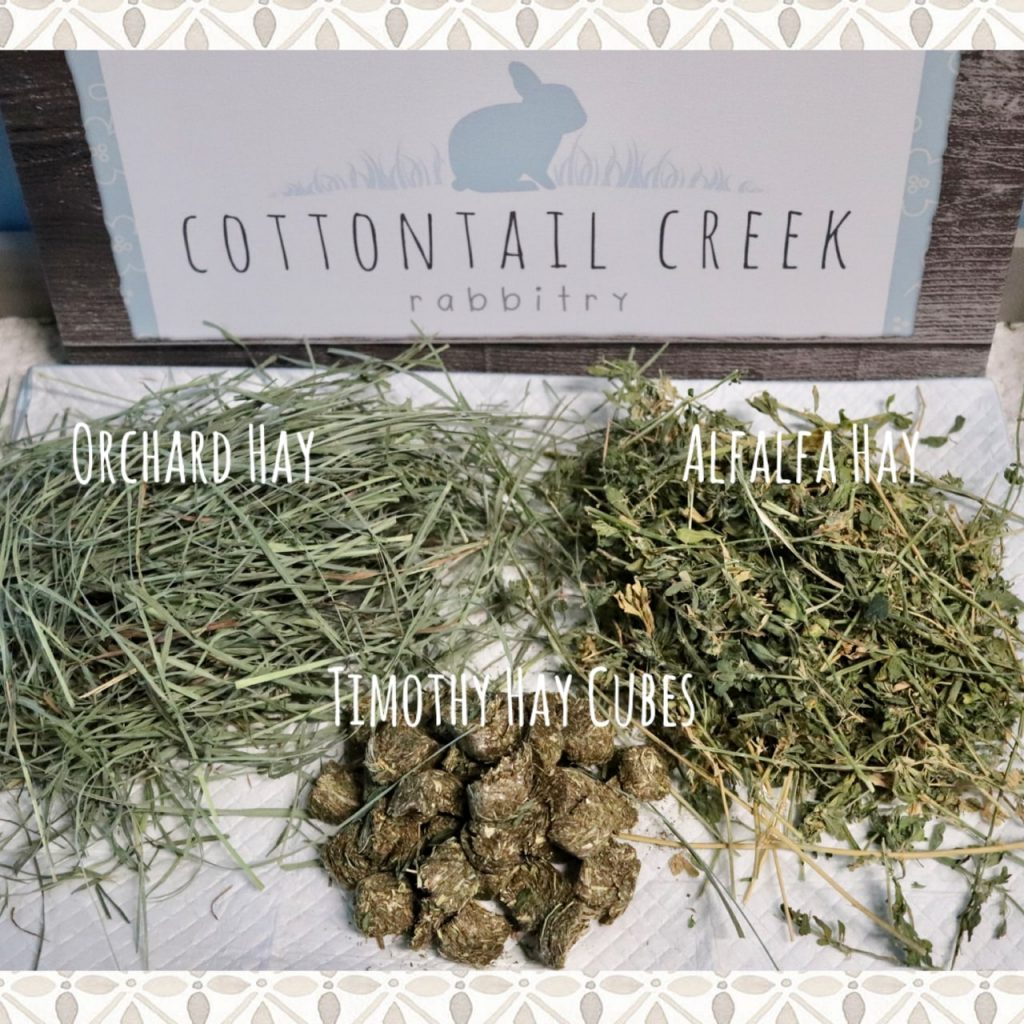 Rabbit hay - these are differenty types of hay we feed our bunnies at Cottontail Creek Rabbitry