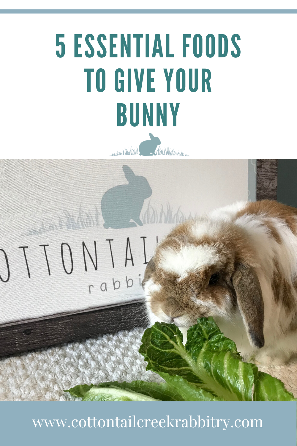 5 essential foods to give your bunny